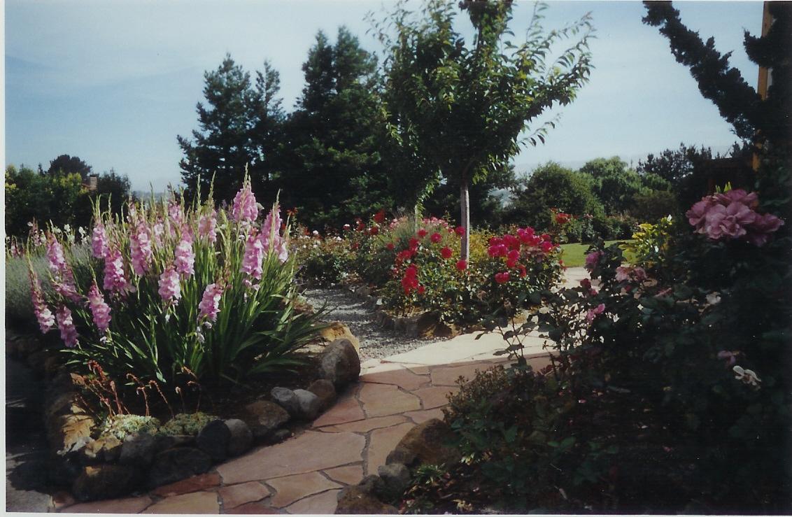 Garden Trellis - Petaluma California