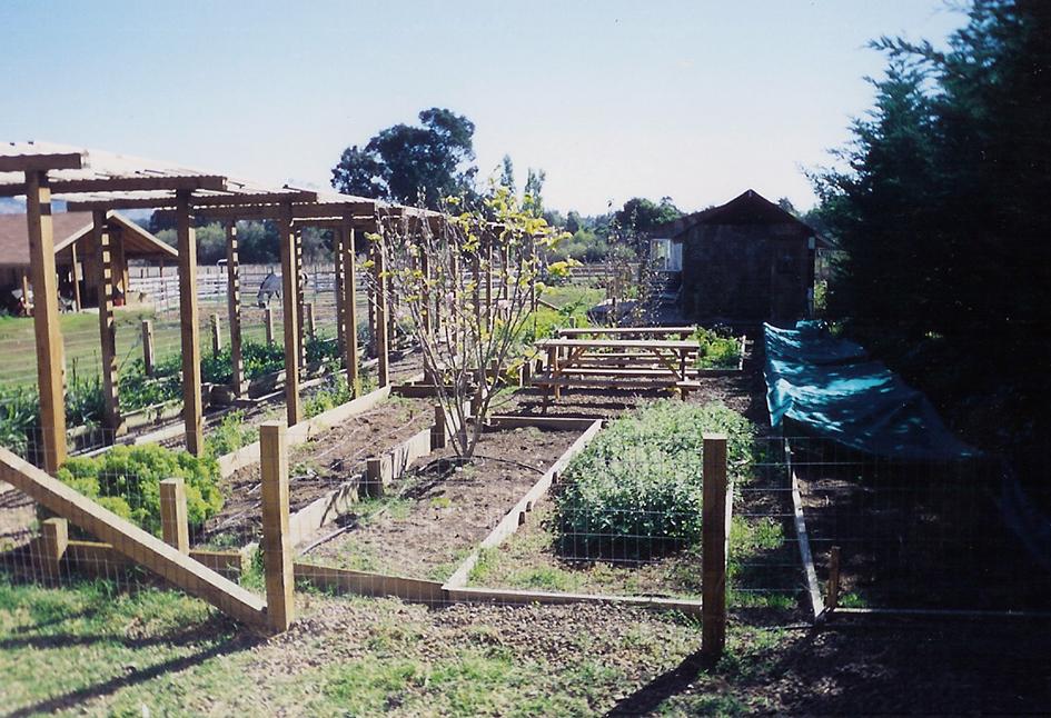 Edible Garden shaded by Trellis Petaluma, California