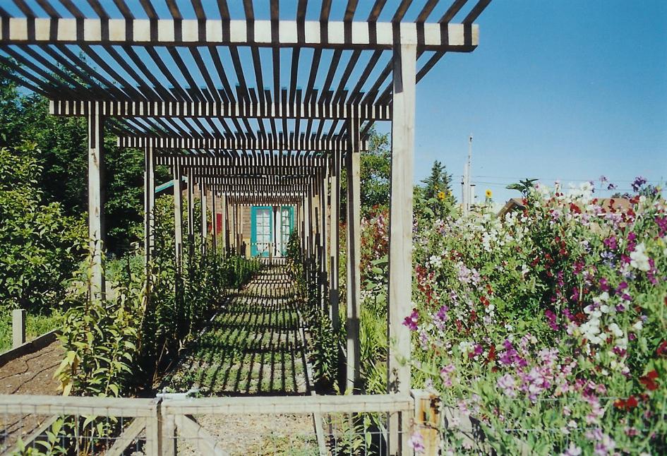 Garden Trellis Petaluma California