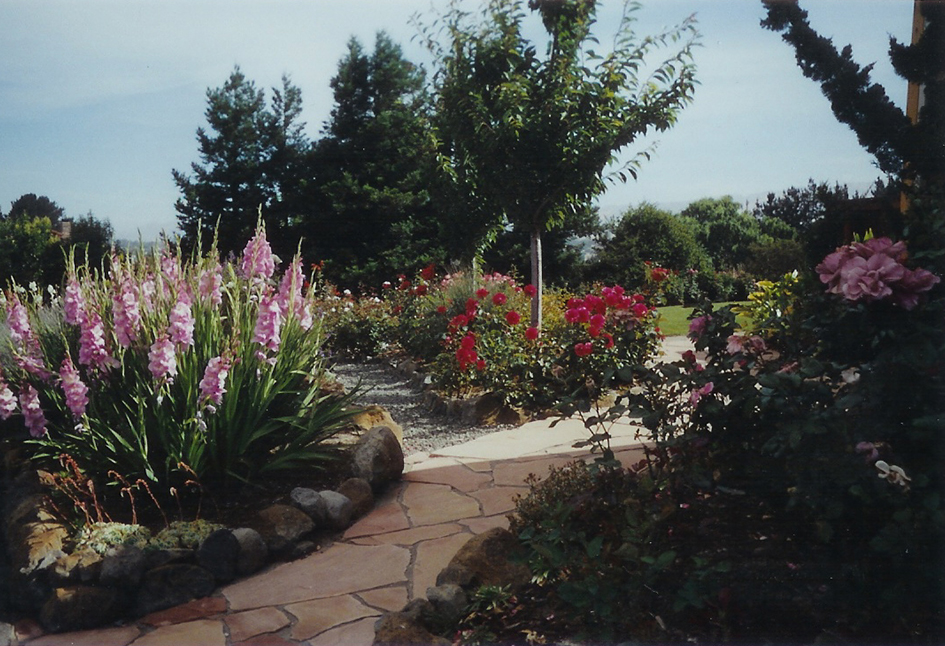 Flagstone walkways among Rose Garden Petaluma California